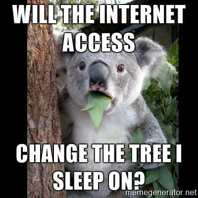 koala-cant-believe-it-will-the-internet-access-change-the-tree-i-sleep-on